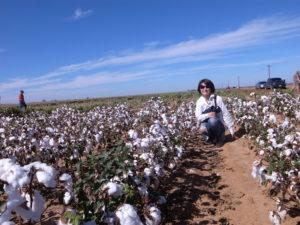 texas_cottonfield